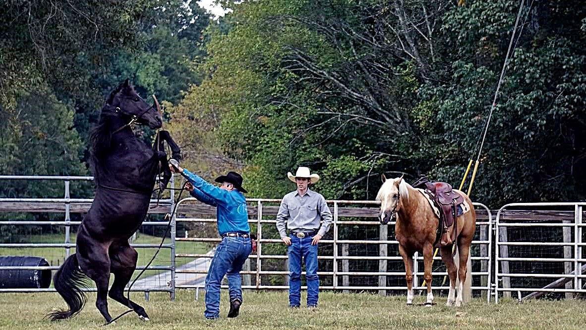 042517-com-horse001.JPG