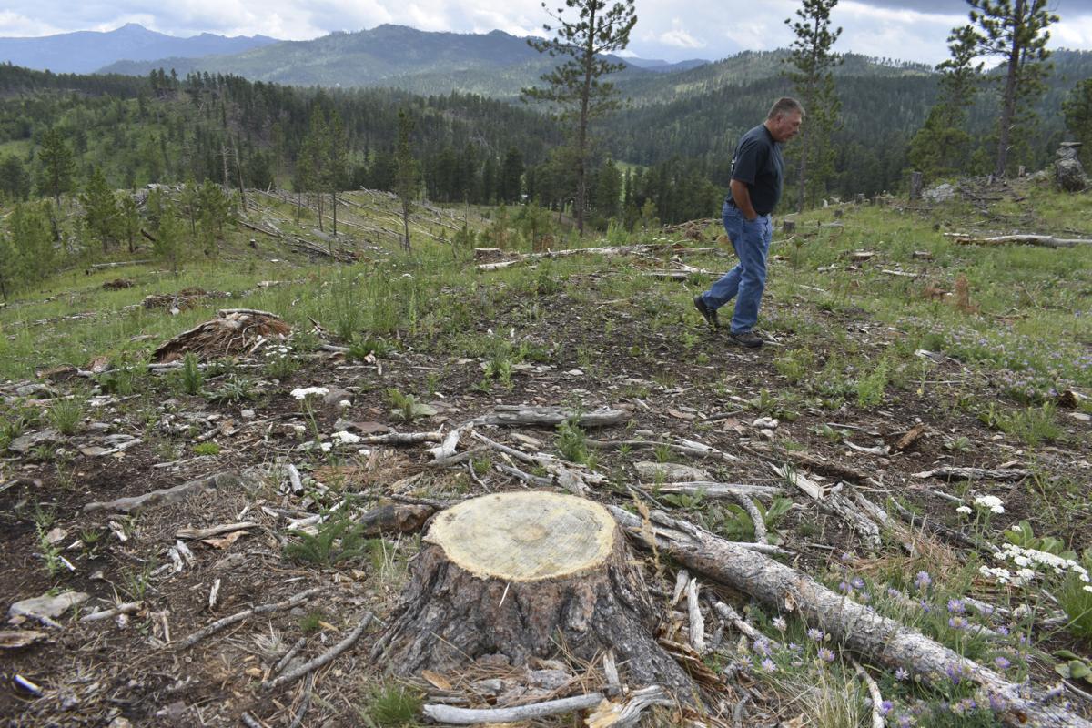 Logging Old Trees 1