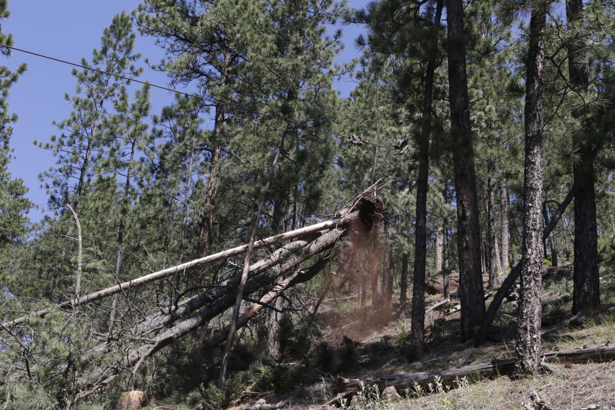 071617-nws-logging2
