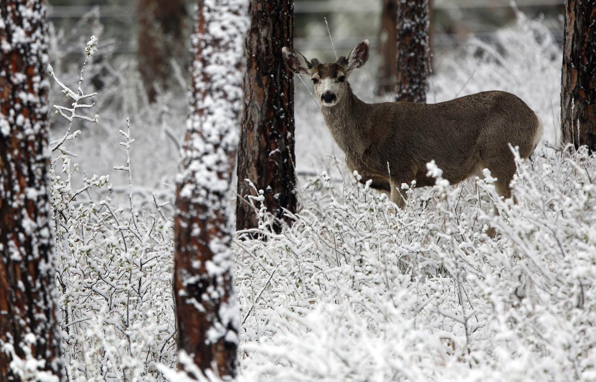 041117-nws-snow001.JPG