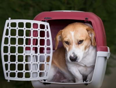 Some of the ways to keep your pets safe during hurricane season is to keep the animal inside if you stay home or bring it along if you evacuate.