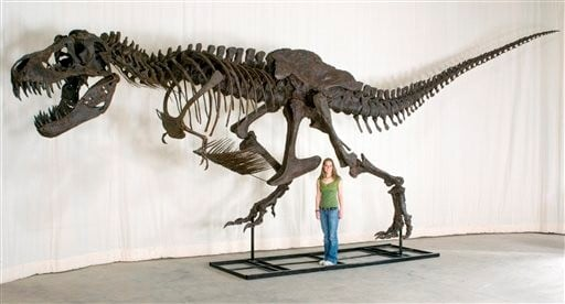Judge Orders Talks In Tyrannosaurus Rex Dispute News