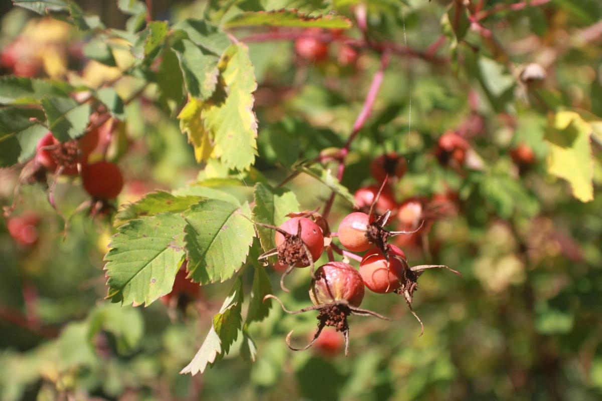 Berries Spearfish Canyon
