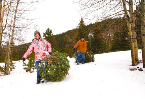 Christmas tree tag permits now available