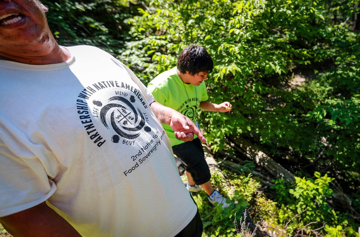 Foraging for Native Plants