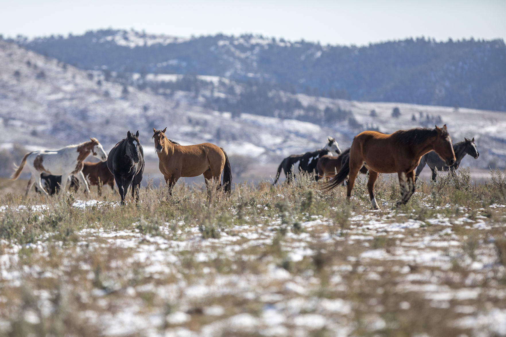Horse Sanctuary Loses Lawsuit Against Nature Conservancy Local Rapidcityjournal Com