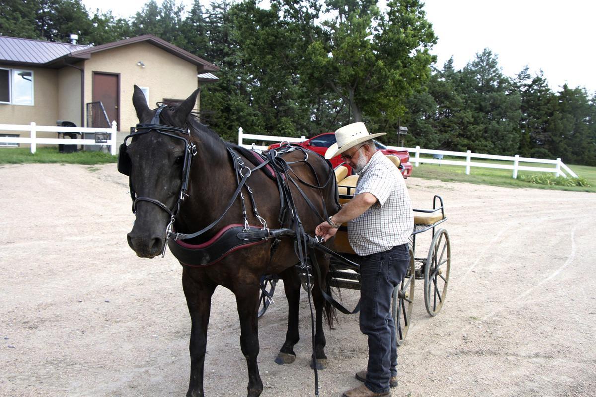 Exchange-Hobby Horses