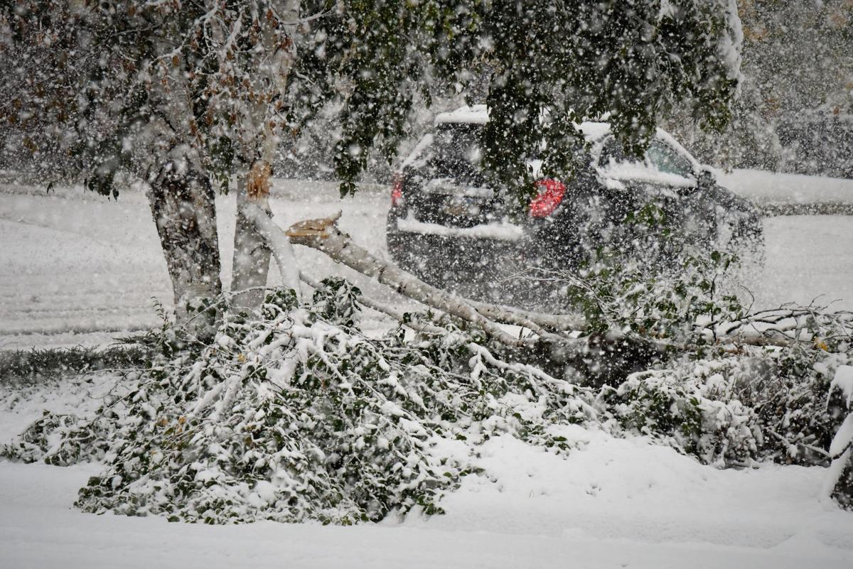 Snow tree Sturgis