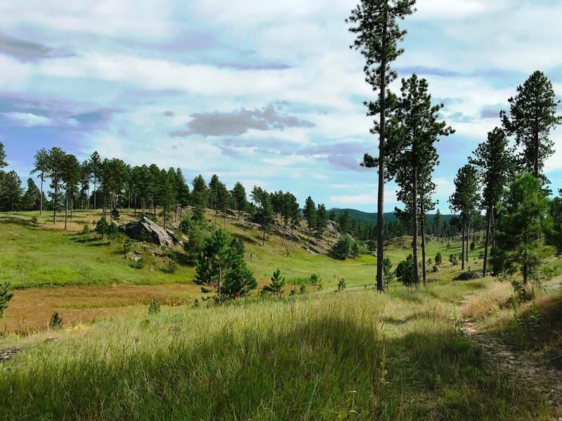 Black Hills National Forest File Art
