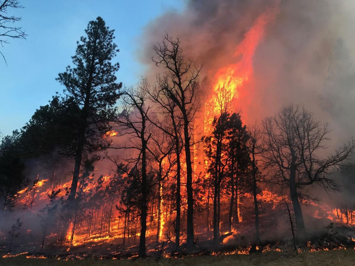 Crews race to stop spread of Custer State Park wildfire | Local
