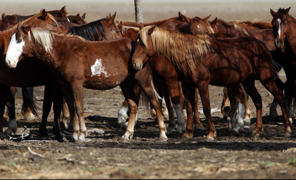 101516-nws-horses001.JPG