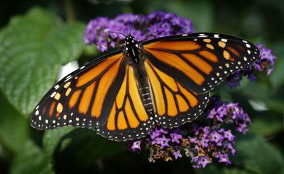 Exchange Missing Monarchs (copy)