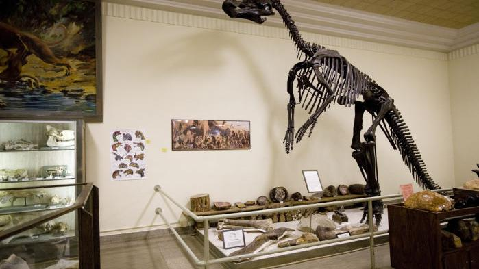 5 Places To See Dinosaurs Or Fossils In The Black Hills