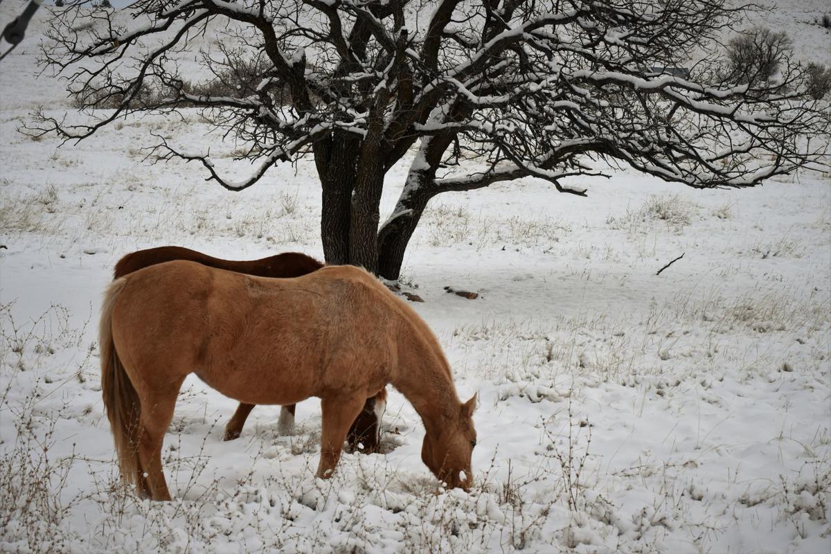 120618-nh-horses002.jpg