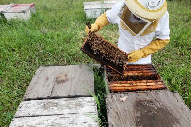 061210.Bees3.jpg
