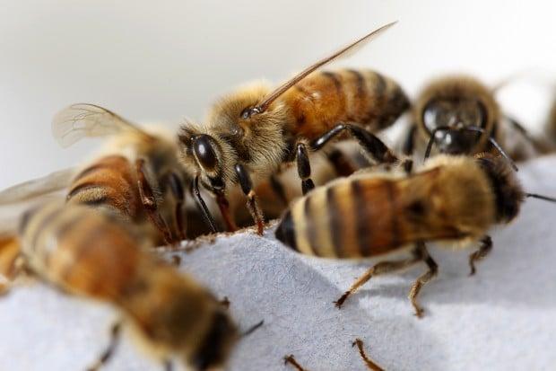 052613-nws-bees001.JPG