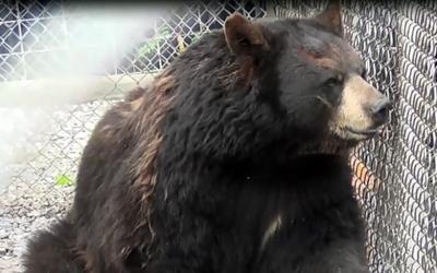 070413-nws-bears.jpg