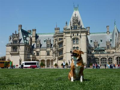 Amazing Asheville, NC:  Pleasing to People and Their Pets (image)