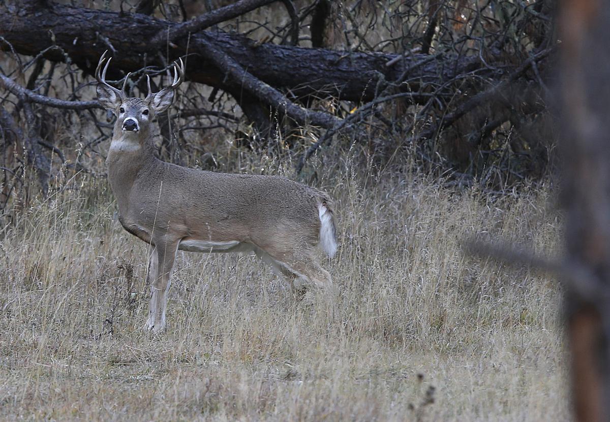 111616-nws-deer002.JPG (copy)