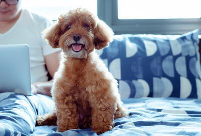 """How Pet Parents """"Shop"""" for Pet-Friendly Accommodations (image)"""