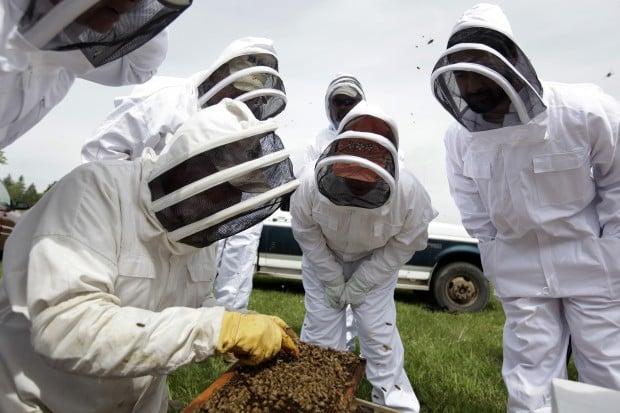 052613-nws-bees002.JPG