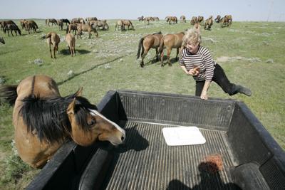 110716-nws-horses2