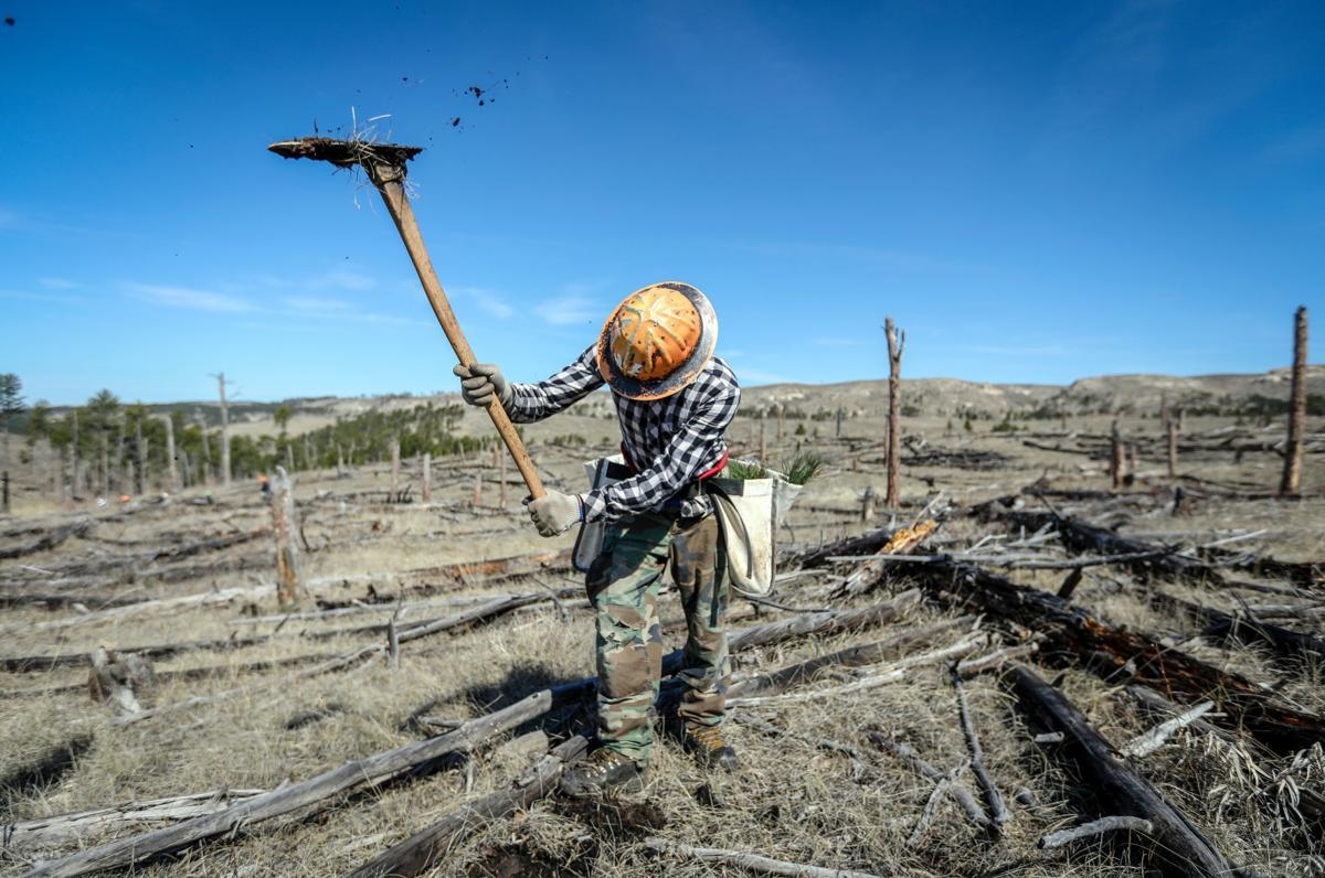 Jasper Fire Tree Planting