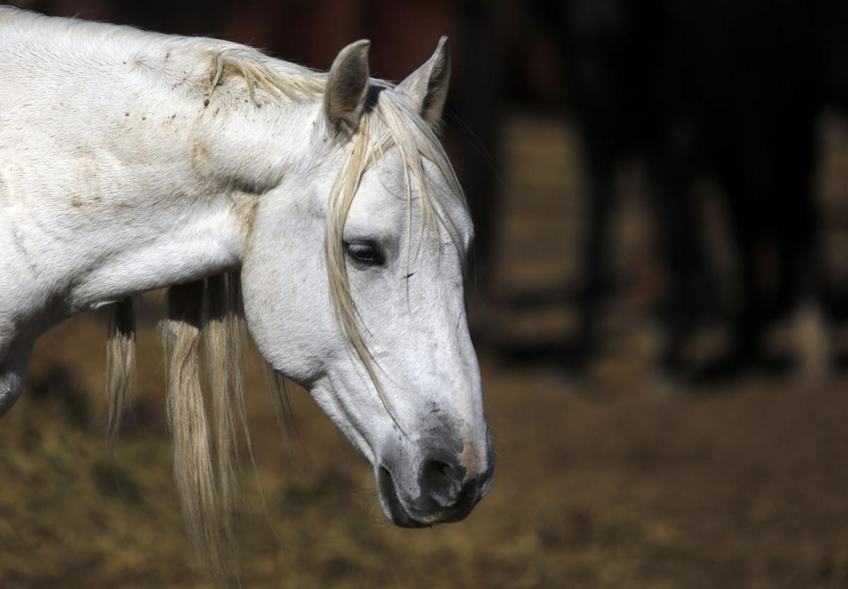 Feds' wild horses now roaming Powerball winner's land | Local