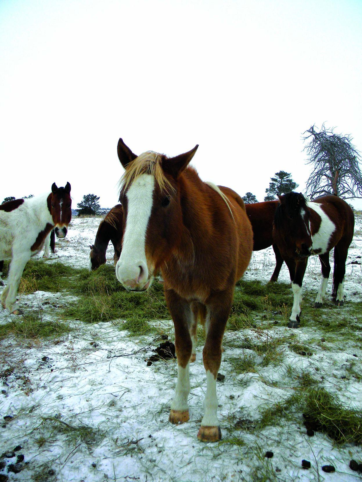 Black Hills Wild Horse Sanctuary Where Dreams Come True Hot Springs Rapidcityjournal Com