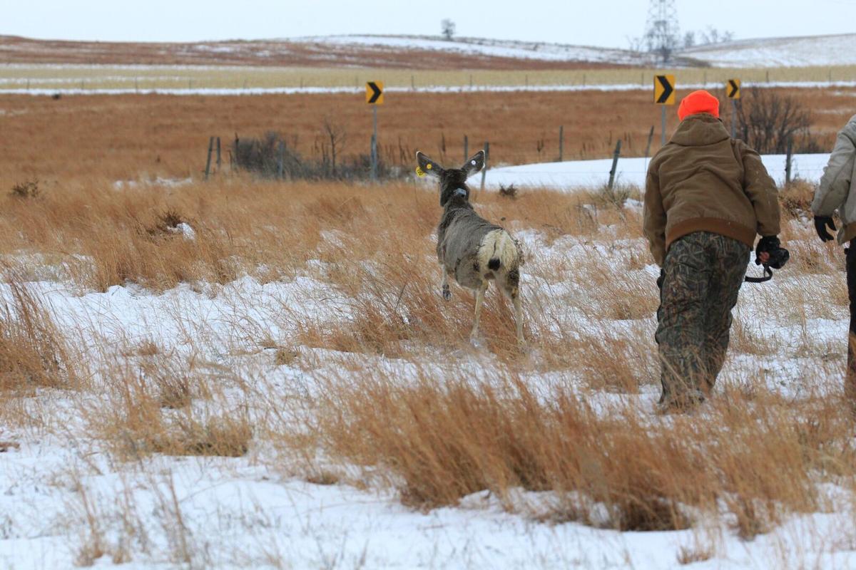 Deer Photo 1.jpeg