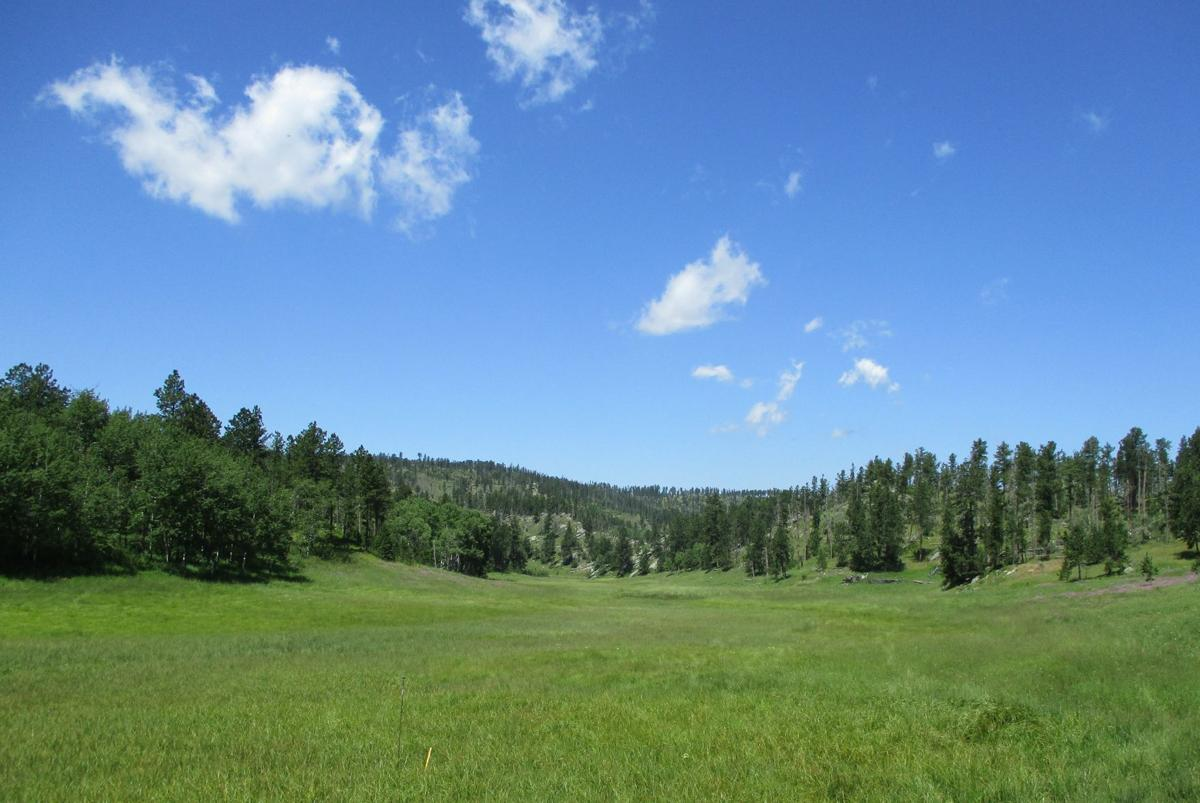 Black Hills National Forest land purchase
