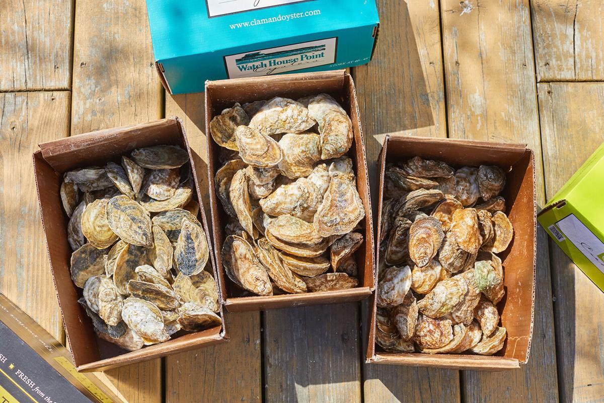 Varieties of oysters