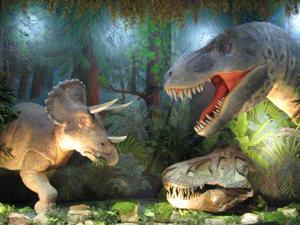 Dino Displays