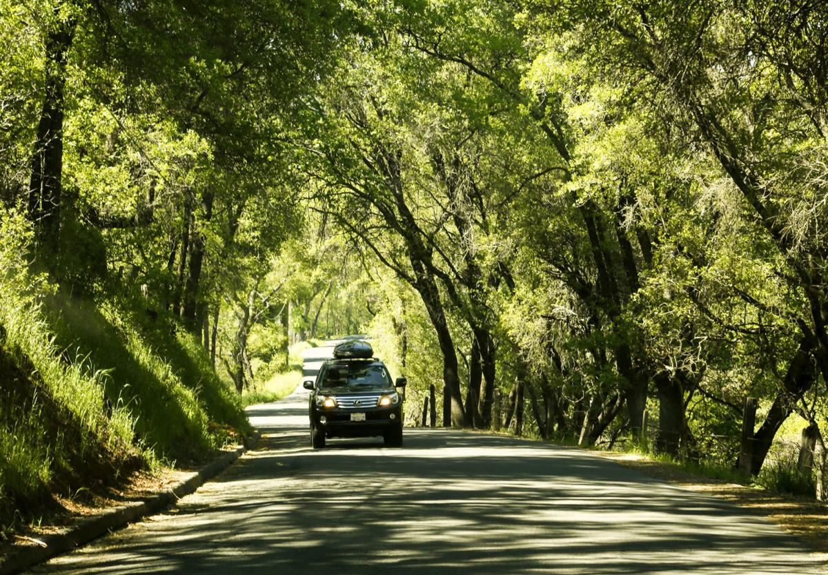 Six Mile Road in the heart of Gold Country provides a scenic drive through a canopy of trees in the town of Murphys, Calif., on May 2, 2017. In the time of coronavirus, more people are looking at car trips as opposed to flying.