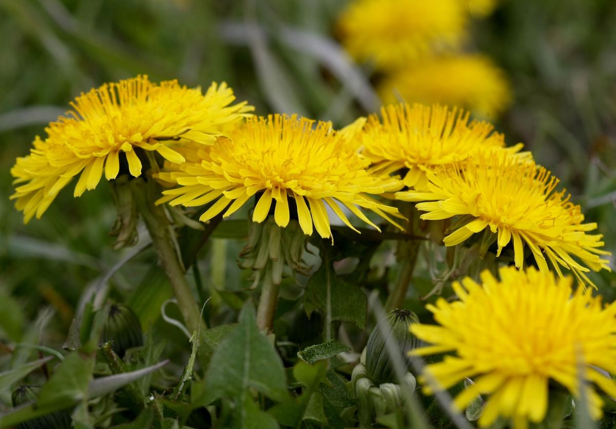 Medicinal Plants To Pick On A Hike In The Black Hills Features