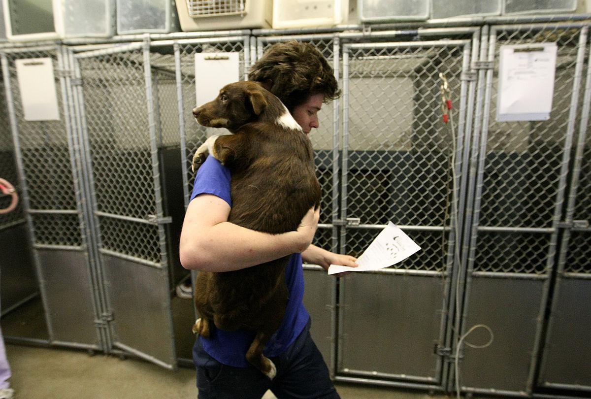 Animal Humane Society Rapid City