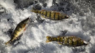 123120-icefishing-003.JPG