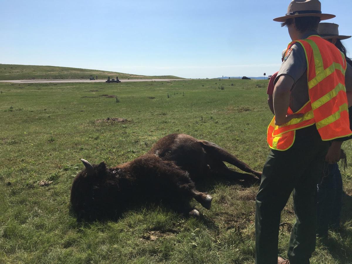 073019-nws-bison 1