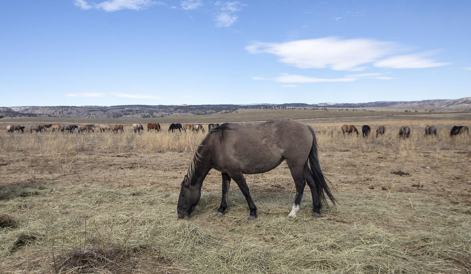 After collapse of one SD horse sanctuary, another one soldiers on