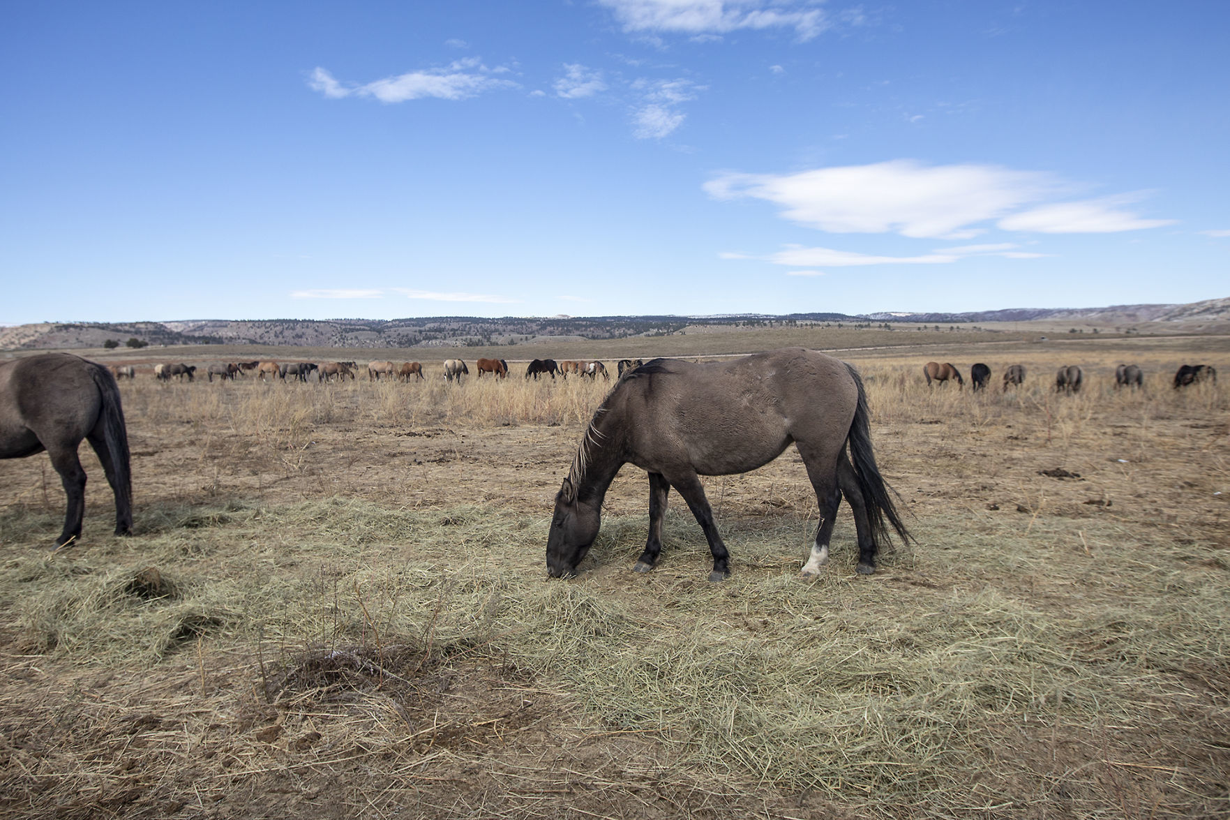 After Collapse Of One Sd Horse Sanctuary Another One Soldiers On Local Rapidcityjournal Com