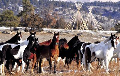 BH Wild Horse