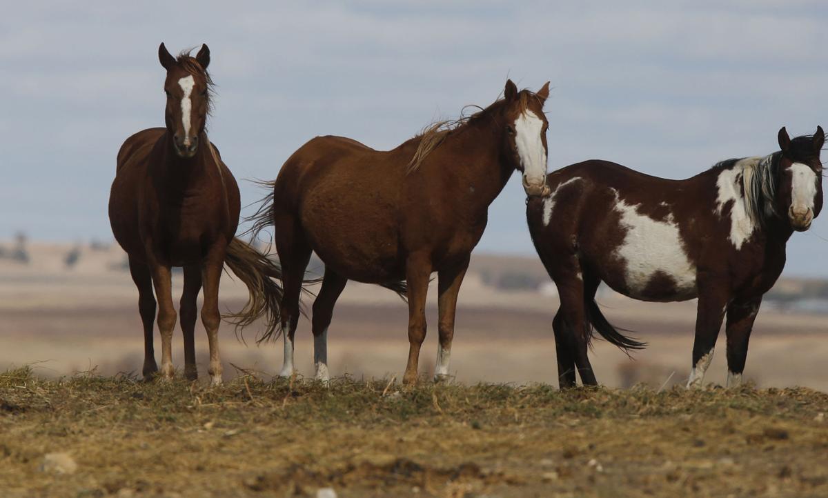 101216-nws-horses001.JPG