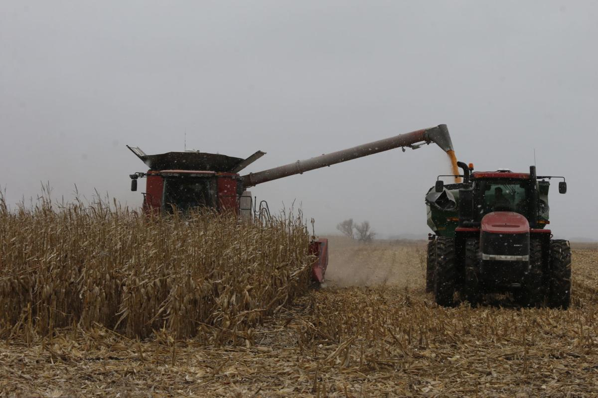 Flooding threatens projected rise in SD corn planting