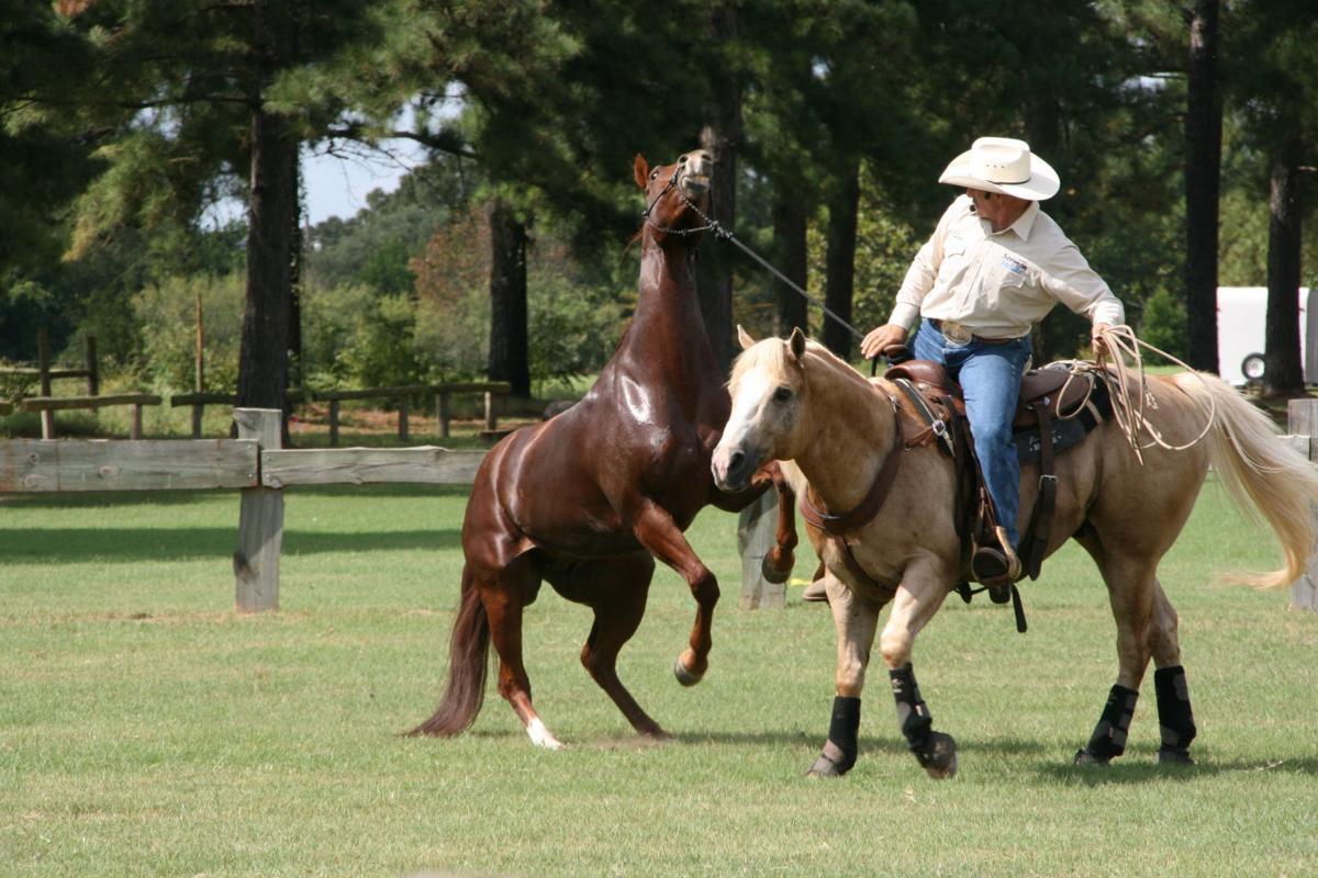 042517-com-horse003.JPG