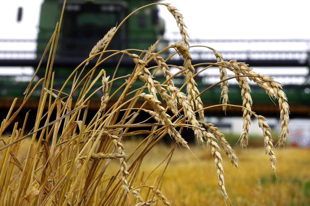 Wheat Harvest (copy)