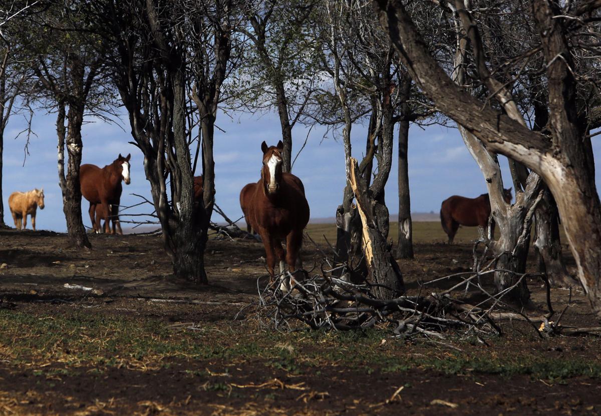 102316-nws-horses12.JPG
