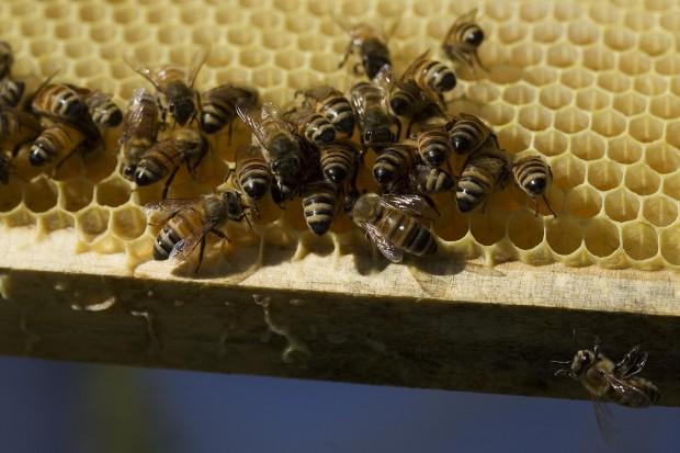 090811.Bees04.jpg