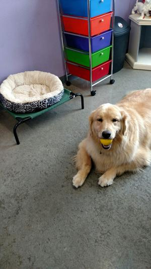 Dog laying down with toy in mouth