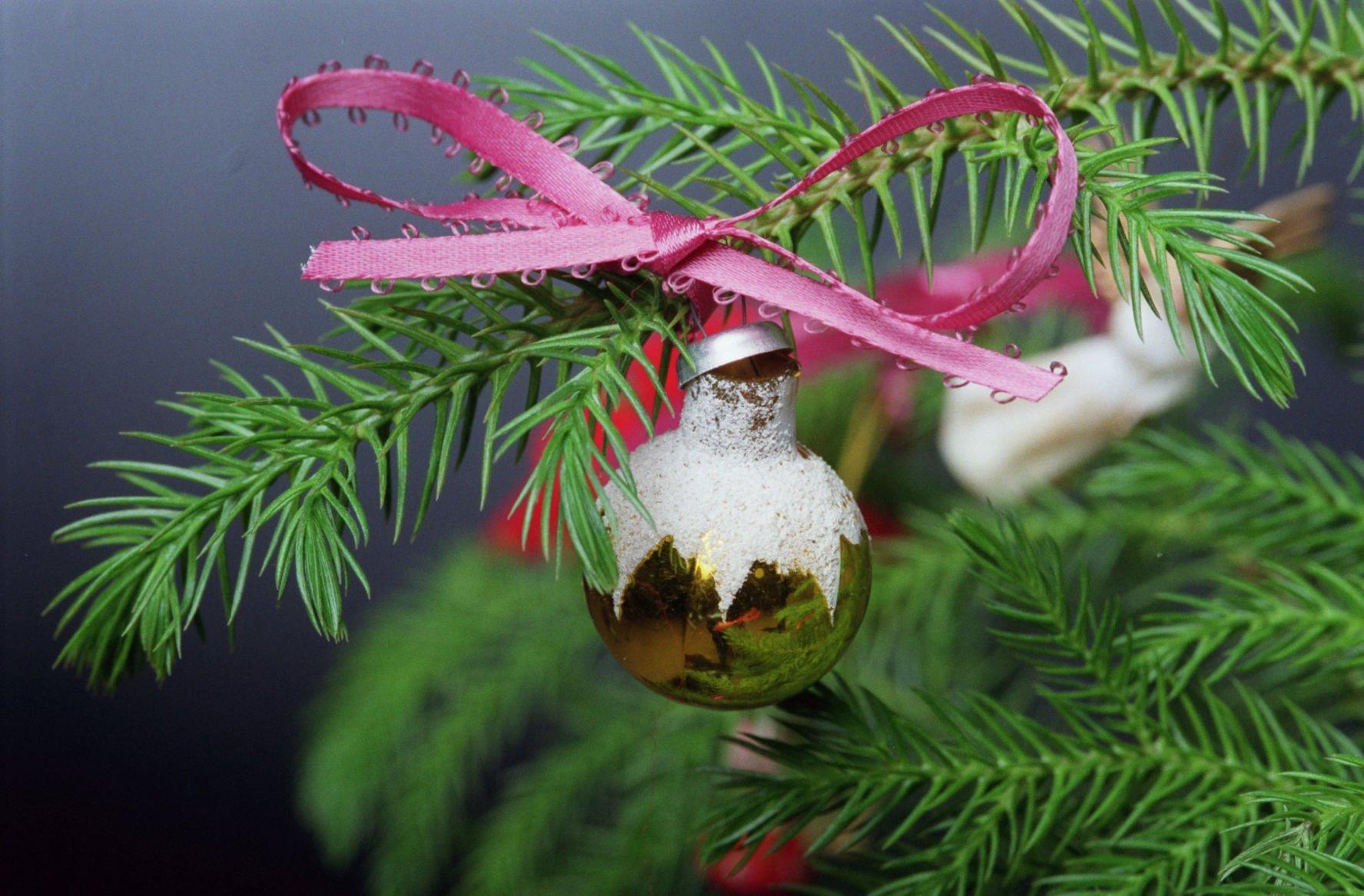 This House Plant Makes An Alternative Christmas Tree Rapidcityjournal Com