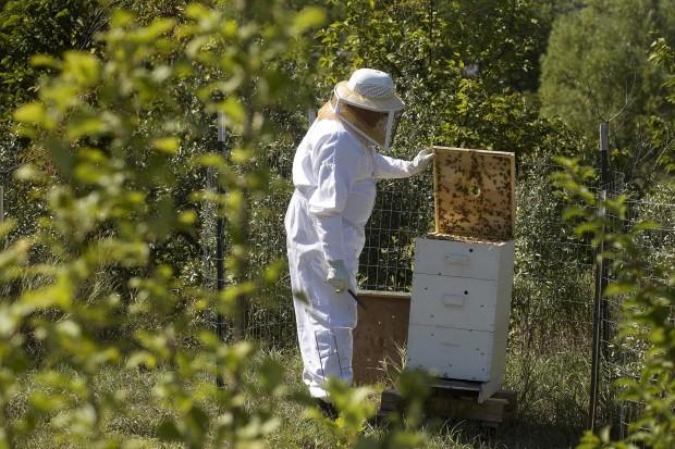 090811.Bees03.jpg